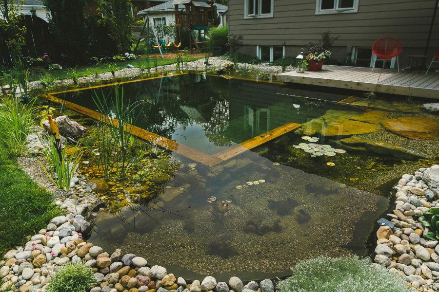 Загородный бассейн природного типа с водными растениями