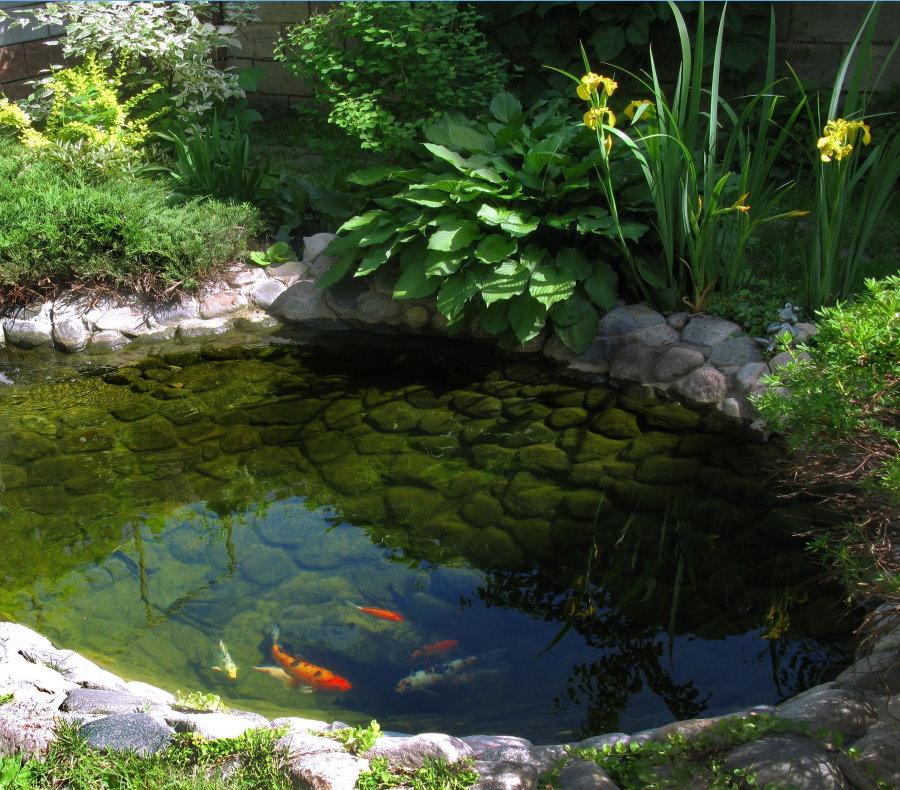 Обустроенный пруд с рыбками на дачном участке