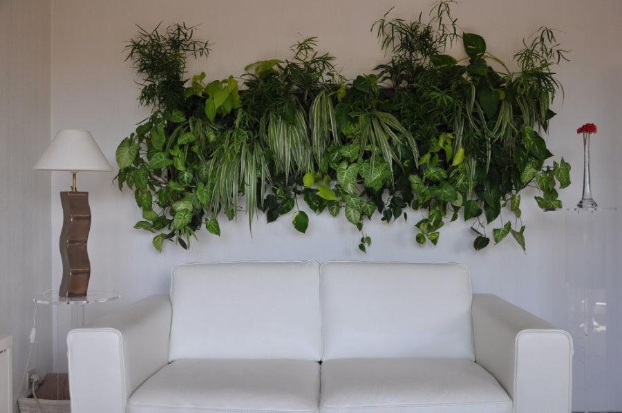 Живые растения над диваном в зале
