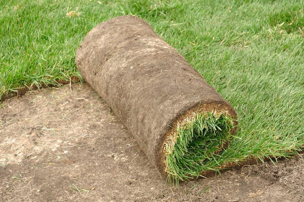 Укладка рулонного газона на садовом участке