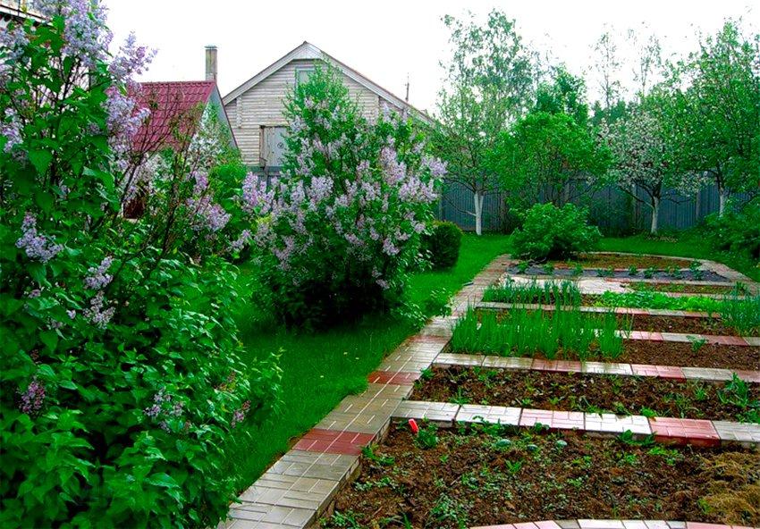 Огородные грядки на садовом участке 6 соток
