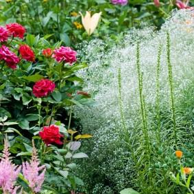 садовый участок площадью 6 соток фото вариантов