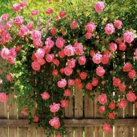 садовый участок площадью 6 соток идеи варианты
