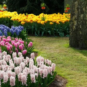 садовый участок площадью 6 соток идеи вариантов