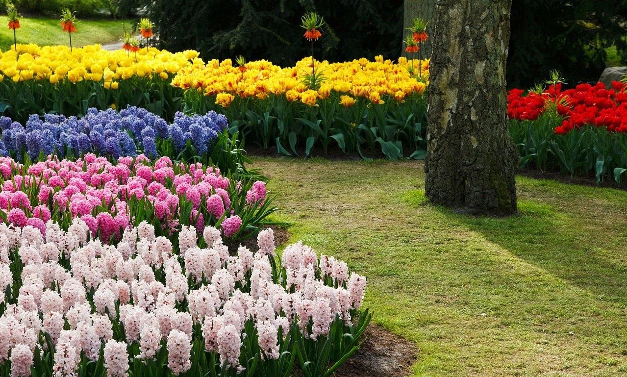 тюльпаны на даче дизайн фото диагностике