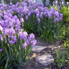 садовый участок площадью 6 соток виды фото