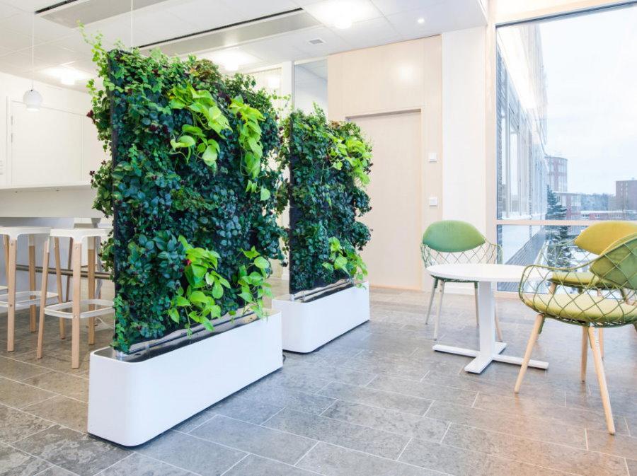 Зонирование гостиной тенелюбивыми растениями