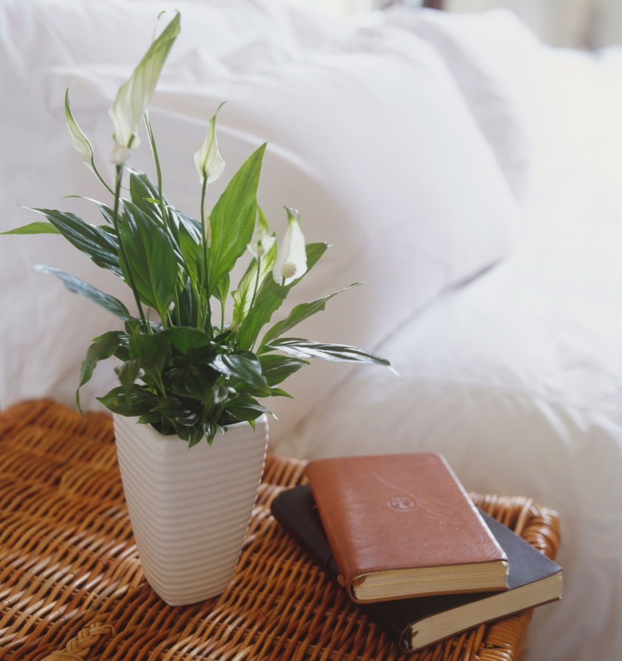 Спатифиллум на прикроватной тумбочке в спальне