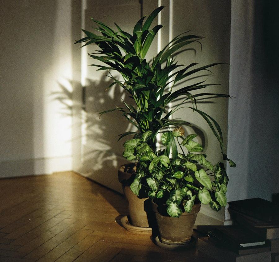 Комнатные растения в условиях затенения