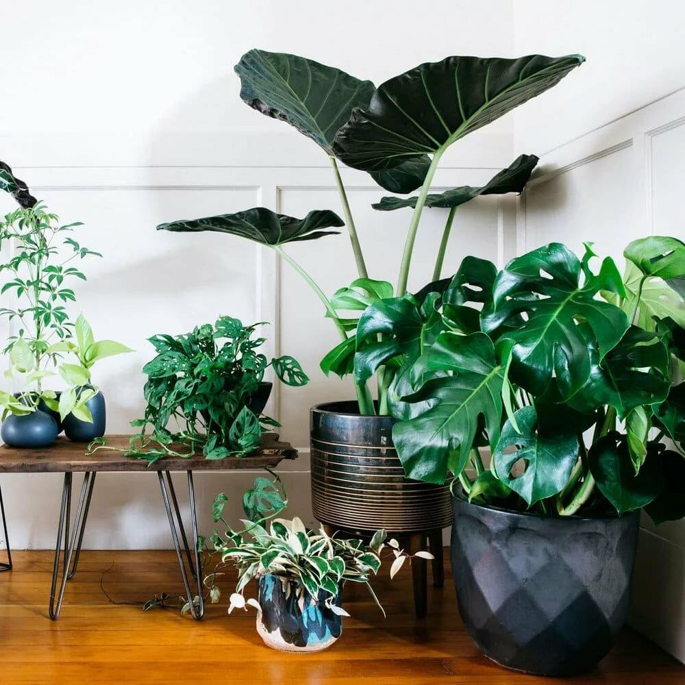 Композиция из тенелюбивых растений в гостиной комнате