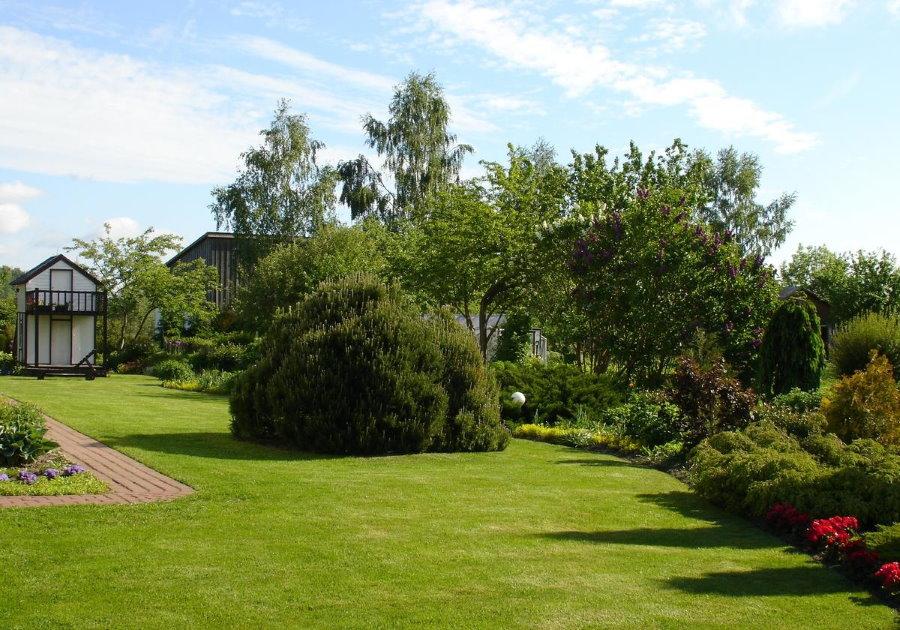 Ровна поверхность газона на садовом участке