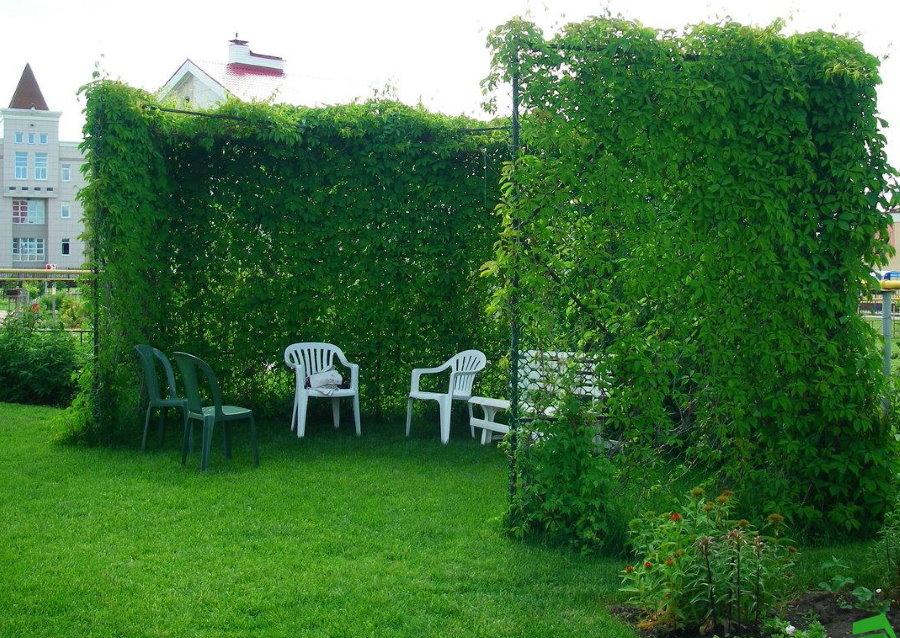 Зона для отдыха в тени вьющихся растений