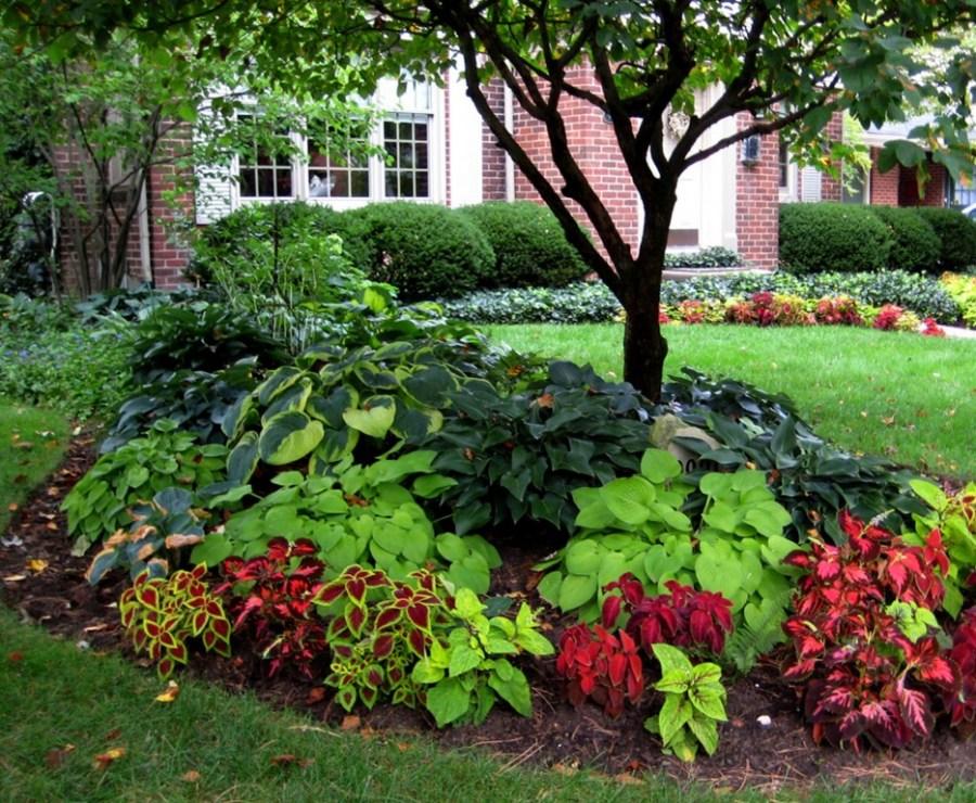 декоративные растения в саду фото