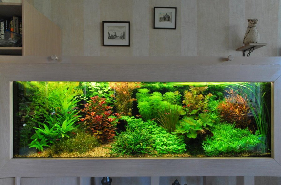 Внешний облик аквариума в голландском стиле
