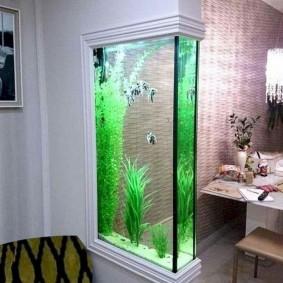 Зеленые водоросли в высоком аквариуме