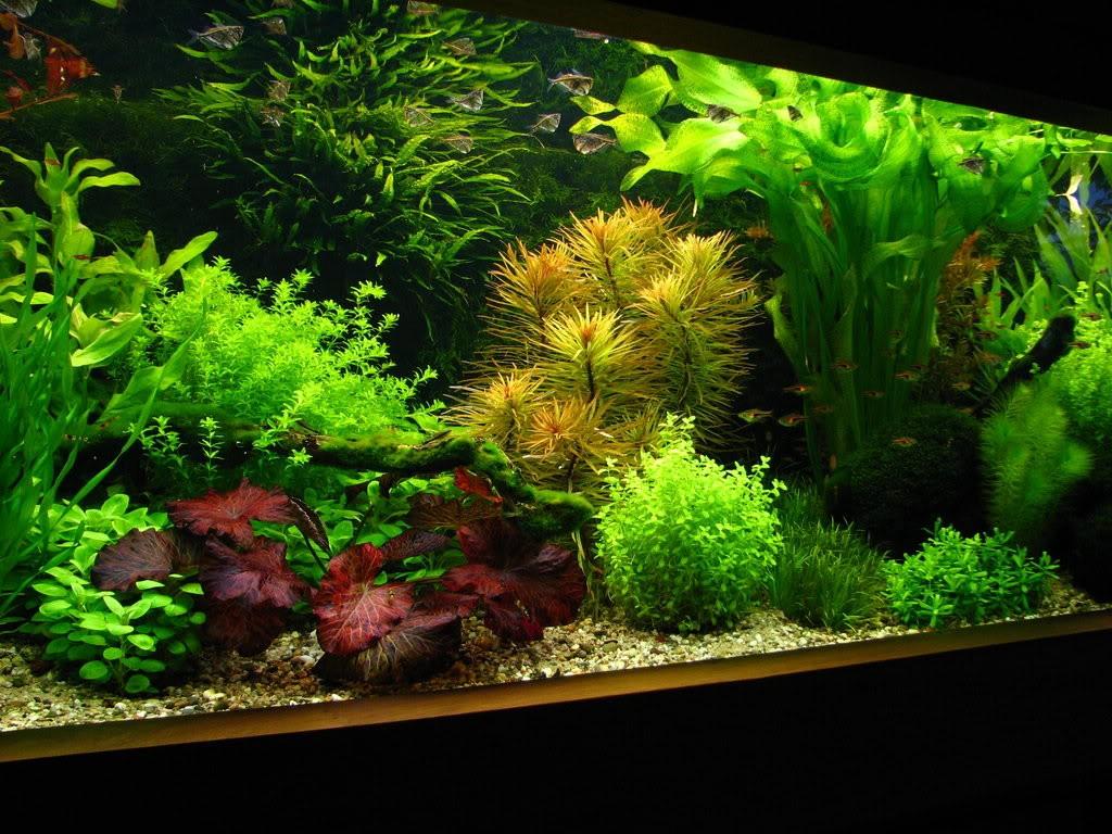 Фото аквариума в коллекторском стиле