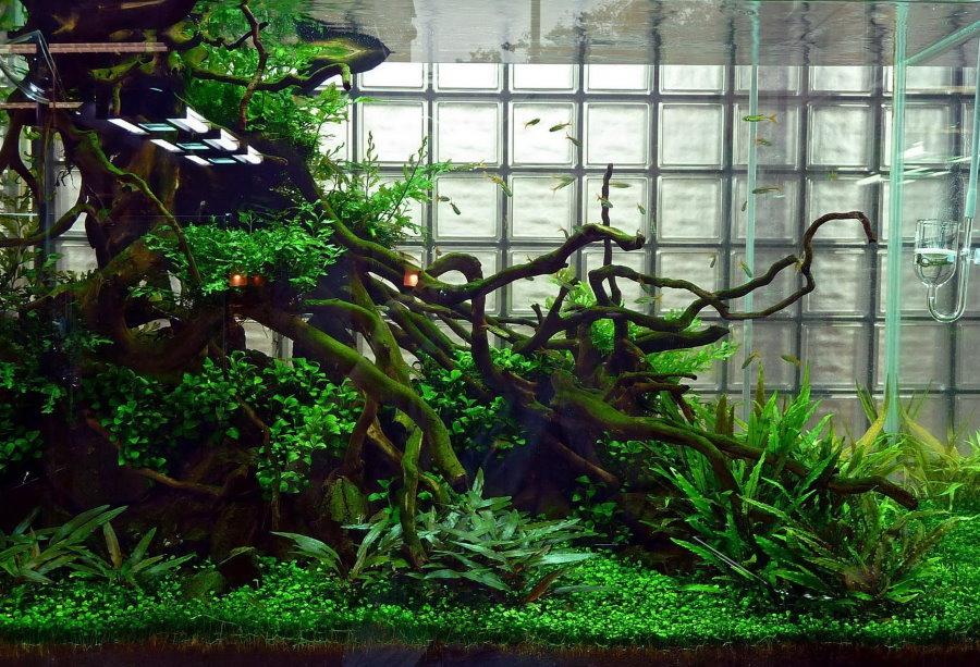Декор корягами аквариума в природном стиле