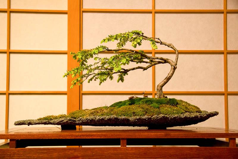 Японский бонсай в стиле фукинагаси