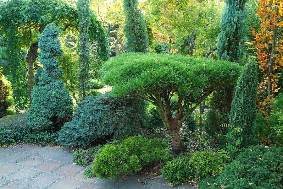 Бонсай из хвойных растений в тенистом уголку сада