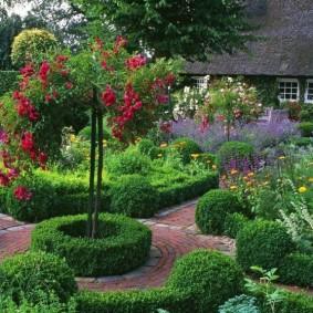 декоративные растения для сада фото декор