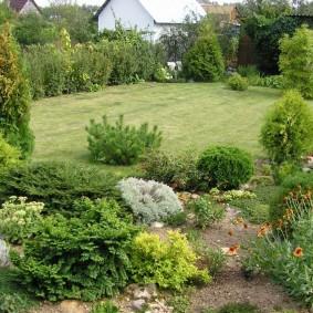 декоративные растения для сада фото декора
