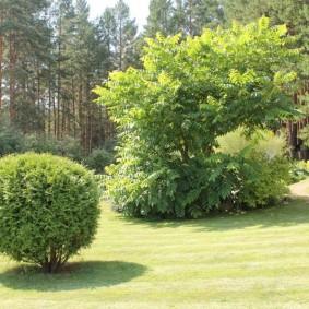 декоративные растения для сада декор идеи