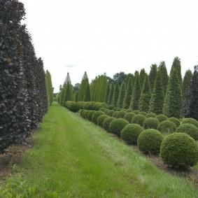 декоративные растения для сада идеи декора