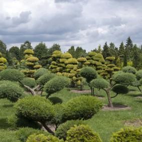декоративные растения для сада оформление
