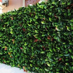 декоративные растения для сада идеи