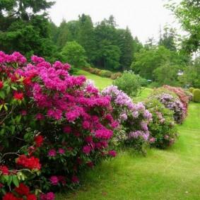 декоративные растения для сада фото оформление