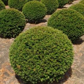 декоративные растения для сада идеи оформление