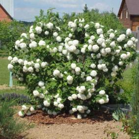 декоративные растения для сада варианты