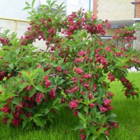 декоративные растения для сада варианты фото