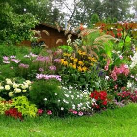 декоративные растения для сада фото варианты