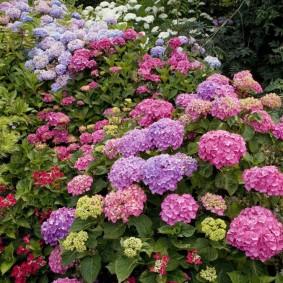 декоративные растения для сада фото вариантов