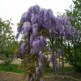 декоративные растения для сада варианты идеи