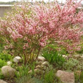 декоративные растения для сада идеи варианты