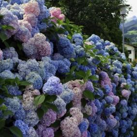 декоративные растения для сада виды