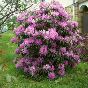 декоративные растения для сада виды фото