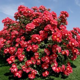 декоративные растения для сада фото виды