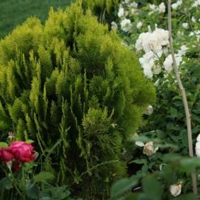 декоративные растения для сада идеи виды