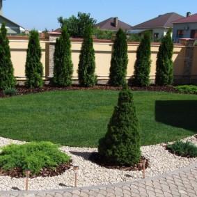 декоративные растения для сада виды декора