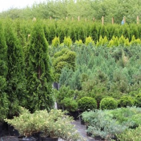 декоративные растения для сада виды оформления