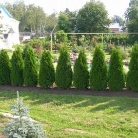 декоративные растения для сада варианты дизайна