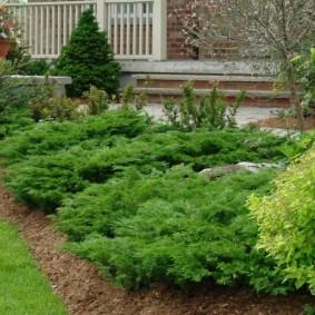 декоративные растения для сада варианты декора