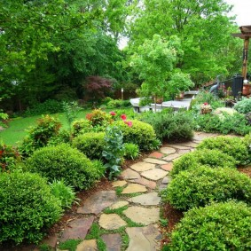 декоративные растения для сада обзор фото