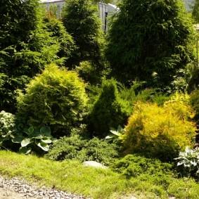 декоративные растения для сада своими руками