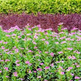 декоративные растения для сада дизайн
