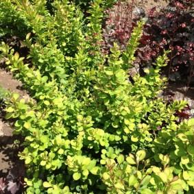 декоративные растения для сада дизайн фото