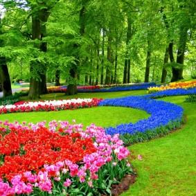 декоративные растения для сада фото дизайн